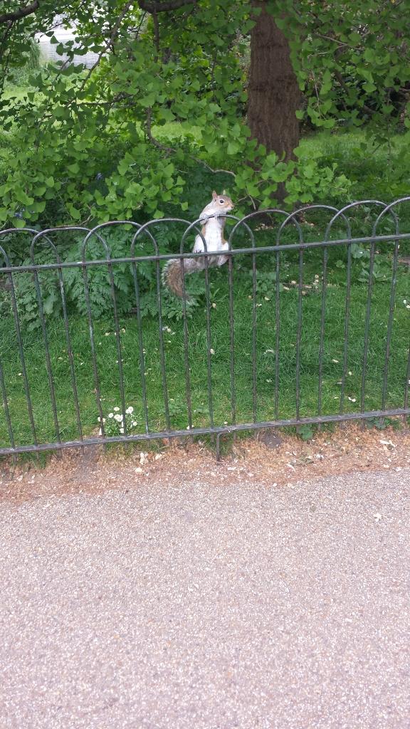 Eichhörnchen London Camden Lock Market